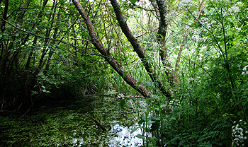 Efford Marsh