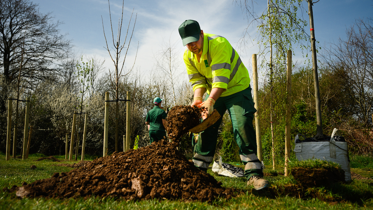 A photo of a member of staff working on trees - photograph by Chris Parkes