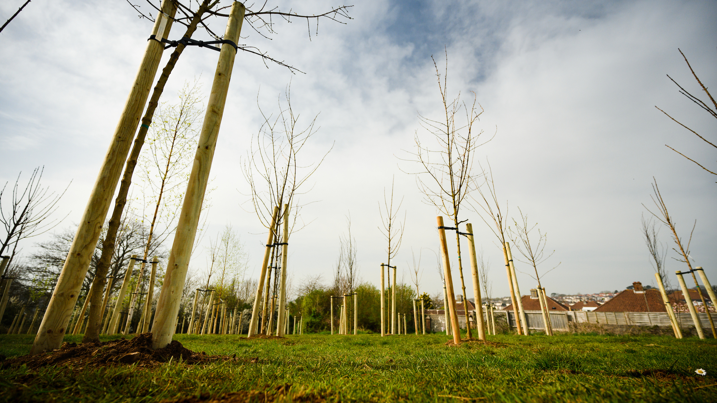 A picture showing newly planted trees - PHOTOGRAPHY BY CHRIS PARKES