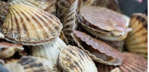 Shellfish harvesting