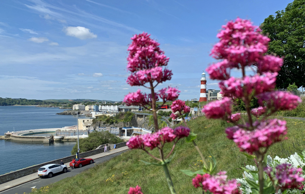 pink wild flowers on the hoe