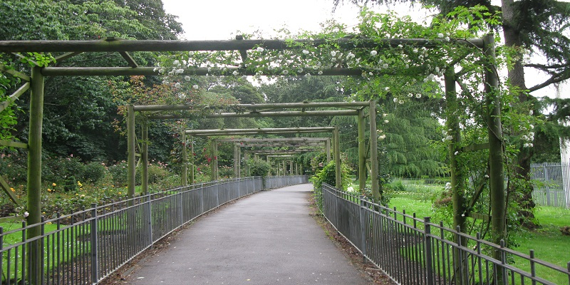 Photograph of a path with a pergola covered in plants over it