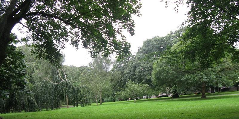 image of grass and trees
