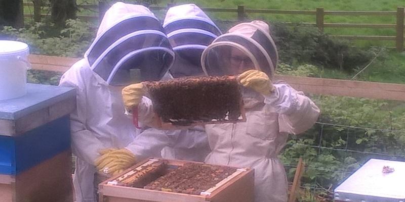 Poole Farm Bees
