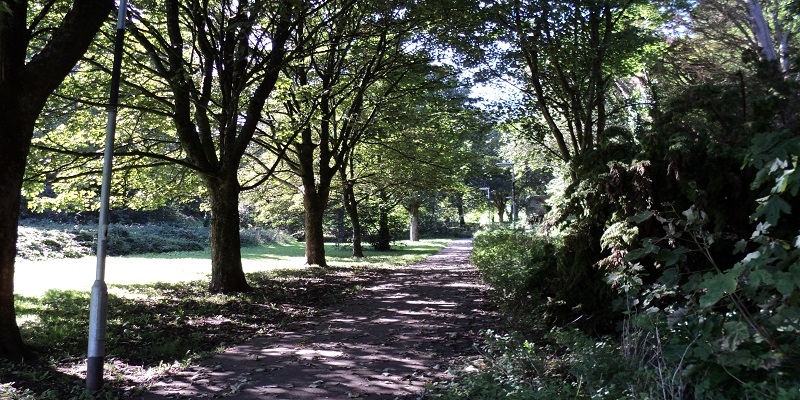 Tree lined path in Efford Valley