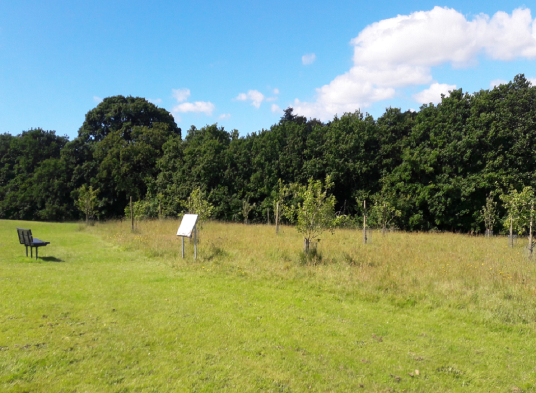 Photograph of a field with hedges and trees in the background.