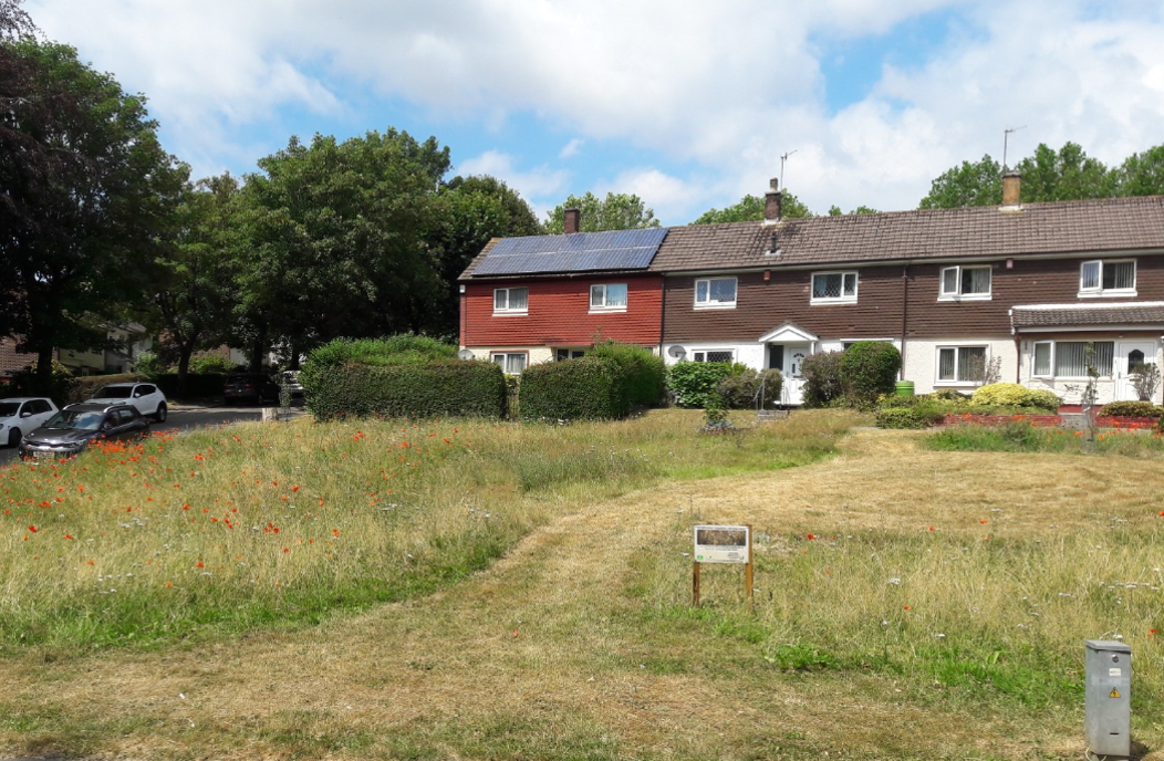 Photograph of a field with houses in the background