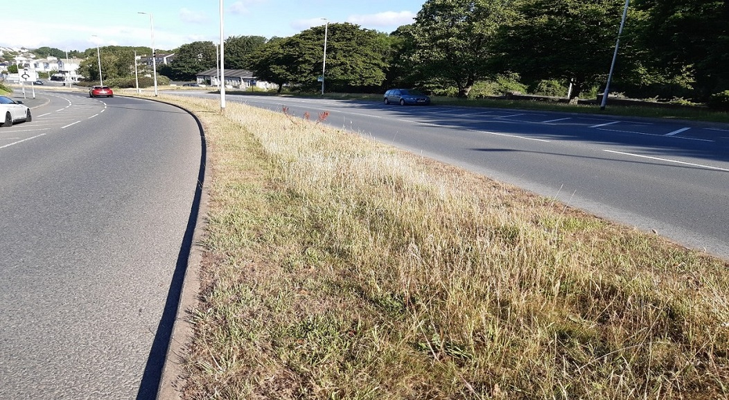 Photo of grass verge with road either side