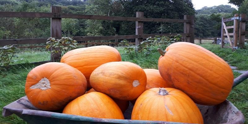 Poole Farm Pumpkins