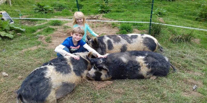 Poole Farm Pigs