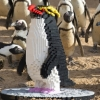 Penguins: A LEGO brick trail