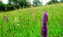 Aylesbury Playing Fields