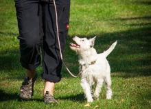 picture of a dog on a lead